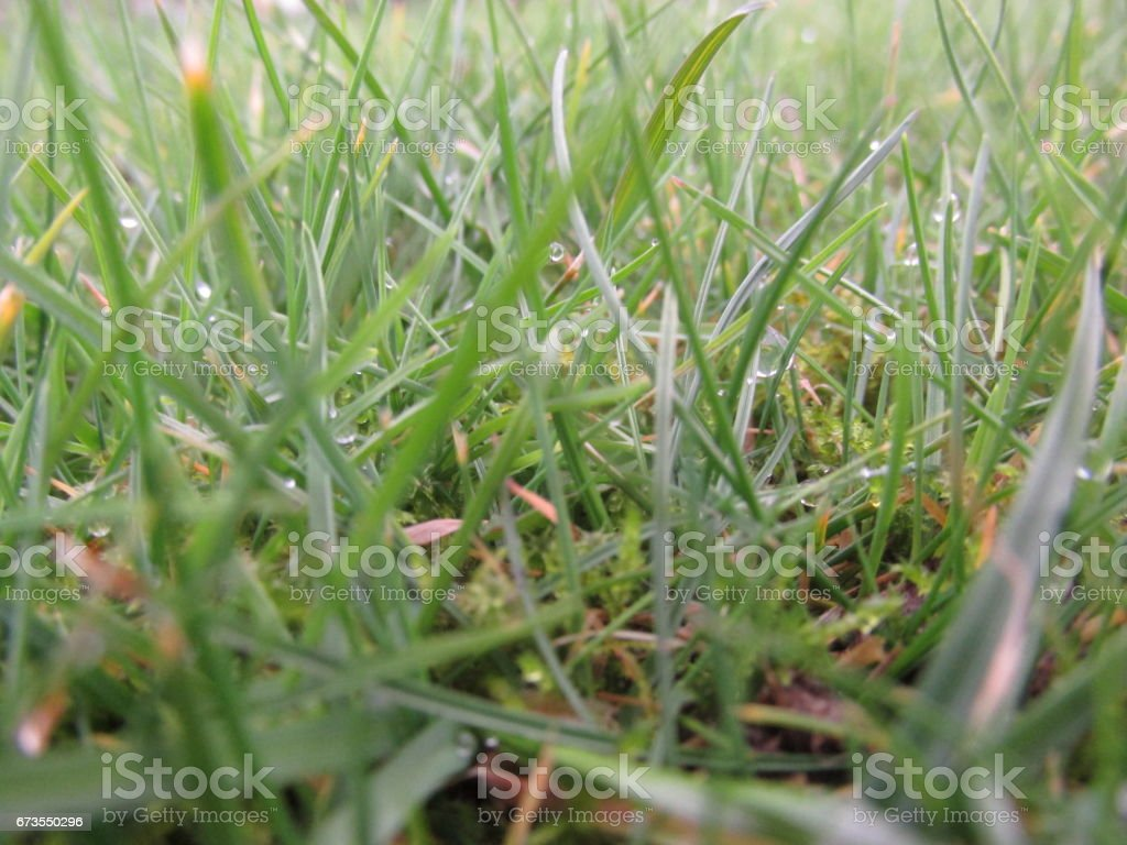 Grasslands royalty-free stock photo
