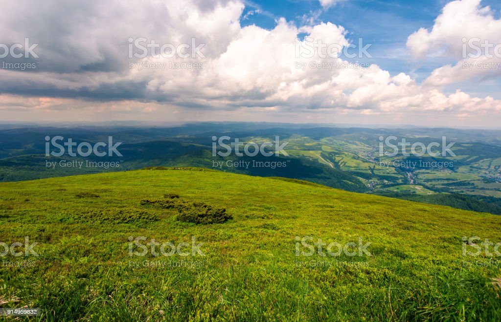 grassy carpet of the mountain meadow stock photo
