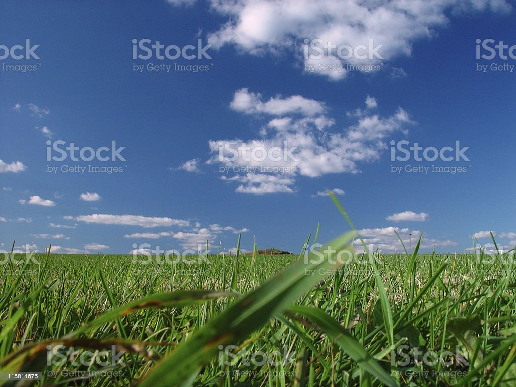 Grassy Field and Puffy Clouds royalty-free stock photo