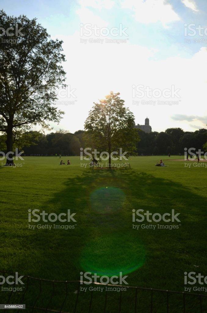 grassy field at sunset stock photo