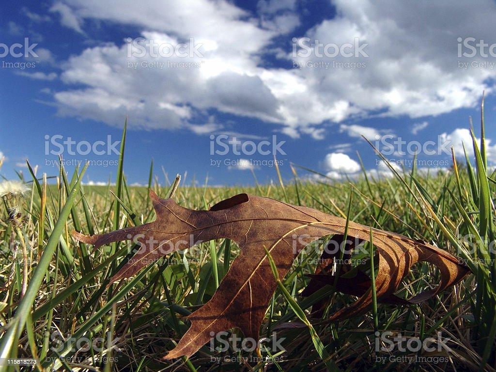 Grassy Field, Blue Sky, Big Leaf royalty-free stock photo