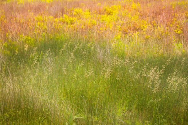 gras feld an einem sonnigen tag mit wasserfarben-effekt - monet bilder stock-fotos und bilder
