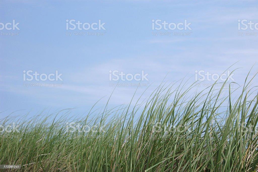 Grassy field stock photo