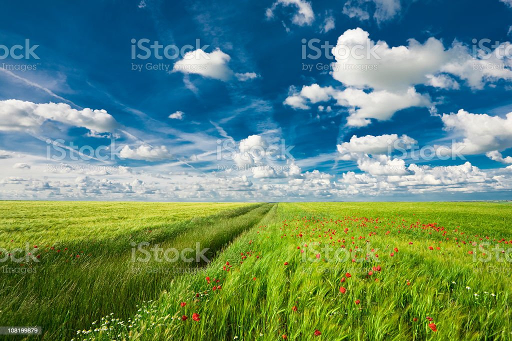 Grassy field with flowers and sky royalty-free stock photo