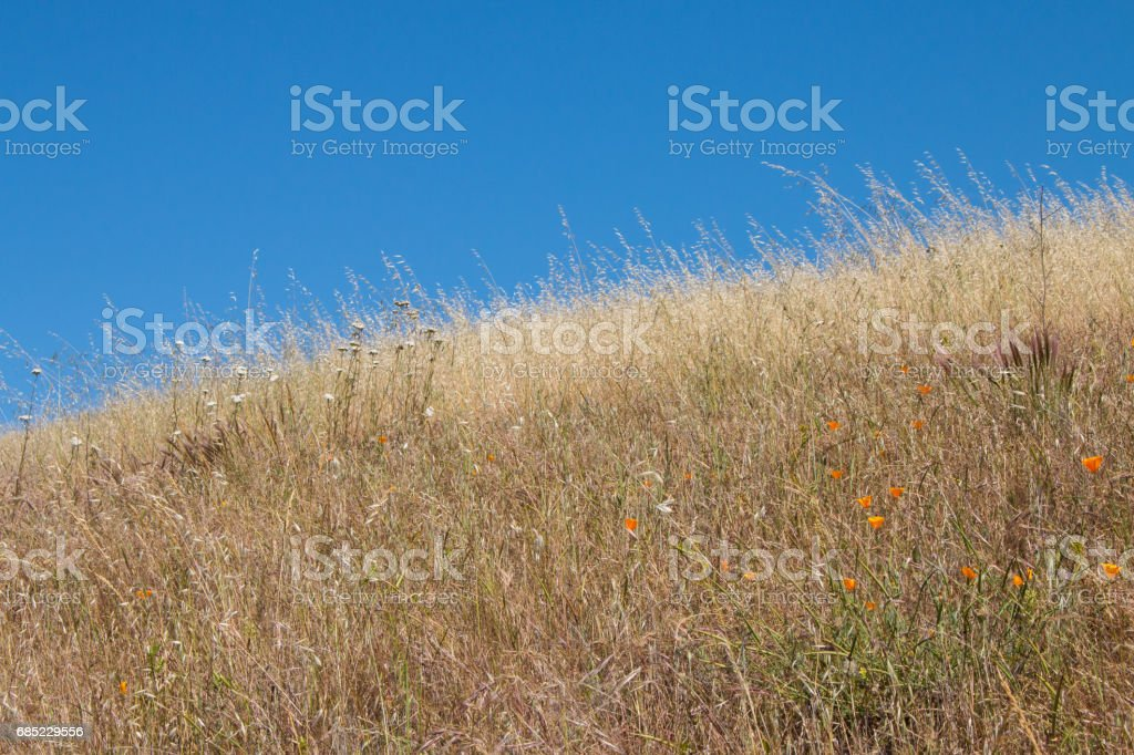 Grassy field with flowers royalty-free stock photo