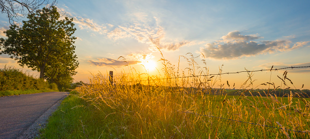 Grassy fields and trees with lush green foliage in green rolling hills below a blue sky in the light of sunset in summer, Voeren, Voer Region, Limburg, Flanders, Belgium, June 25, 2020