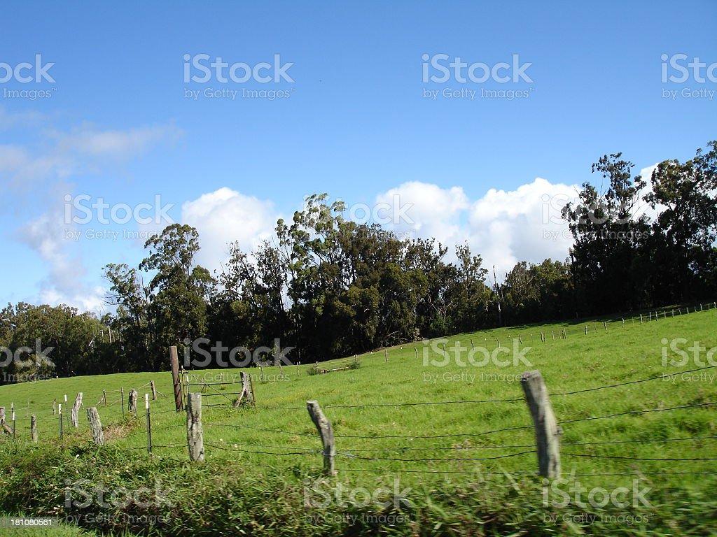 Grassy Fields of Haleakala royalty-free stock photo