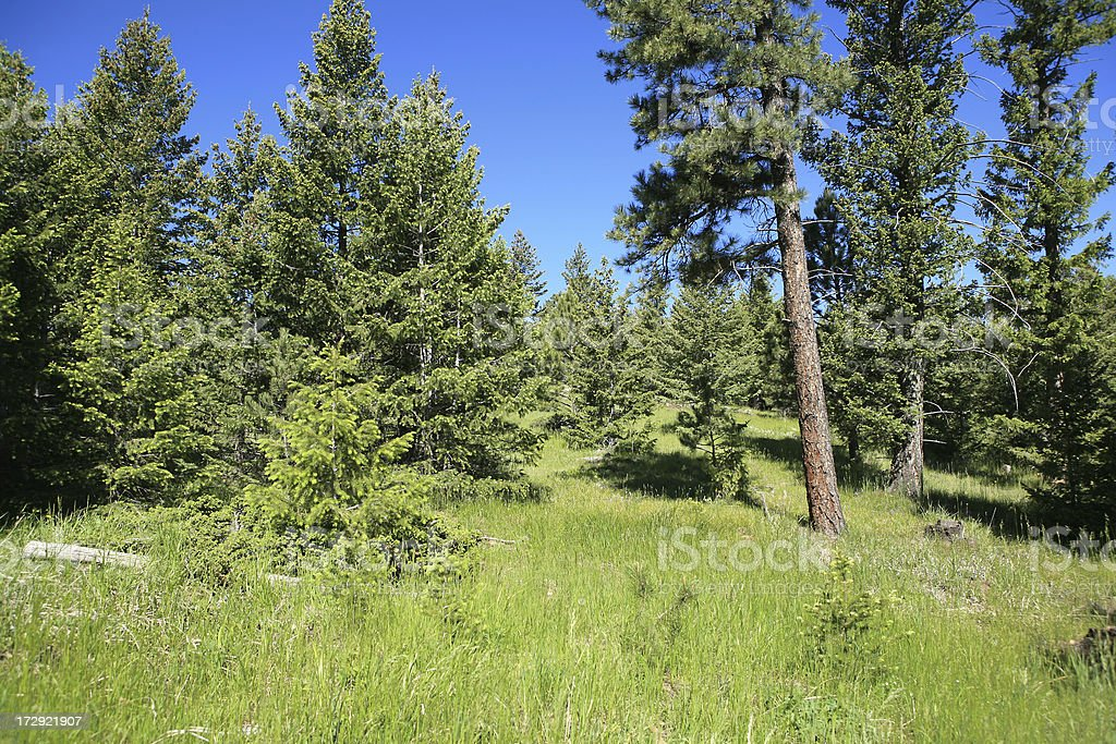 grassy forest royalty-free stock photo