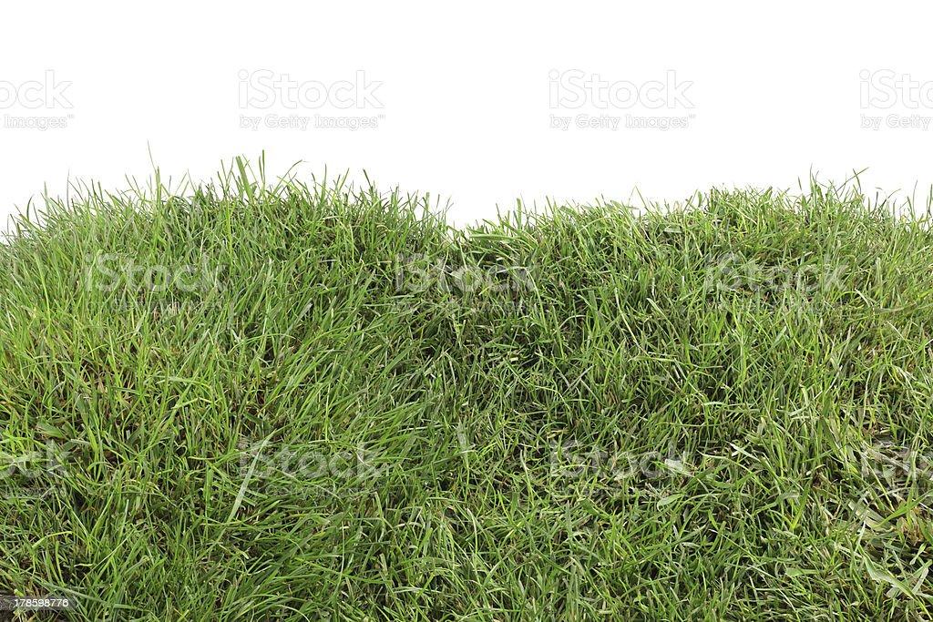 Grassy Hills stock photo