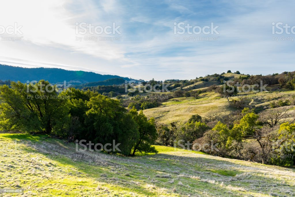 Grassy Hillside on a Sunny Day stock photo