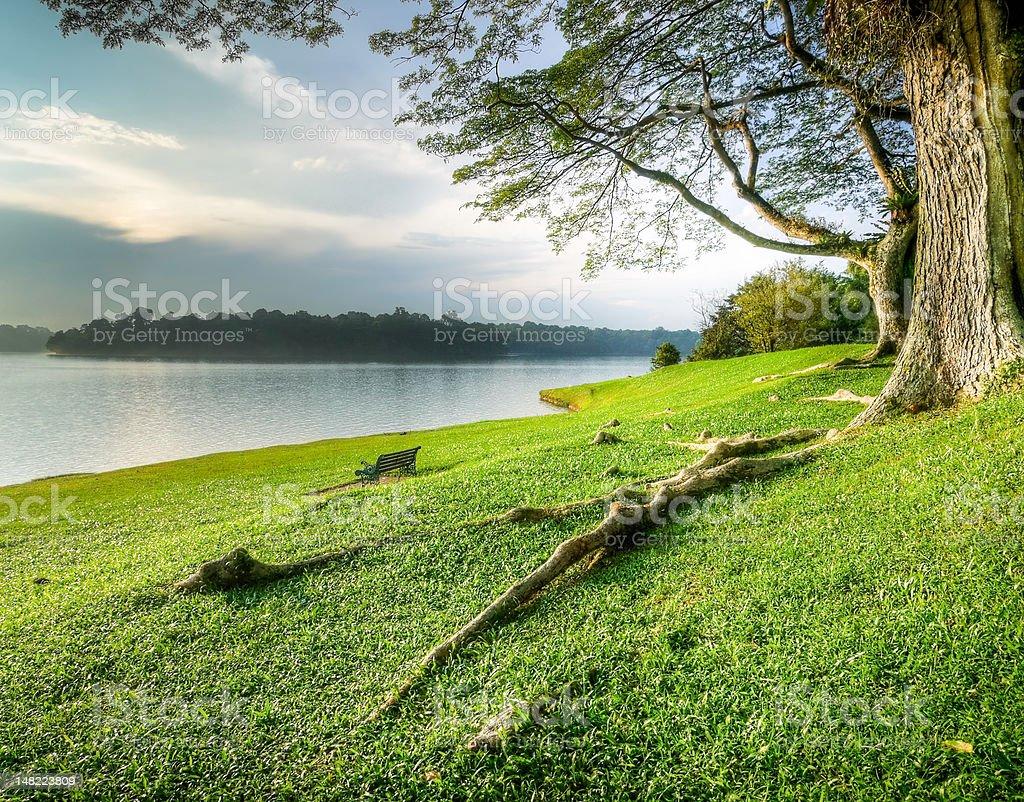 Grassy Lake Side at Sunset stock photo