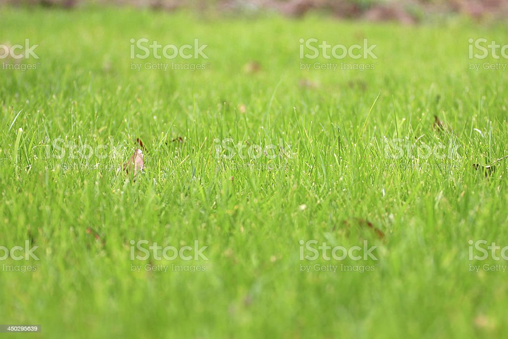 Grassy land royalty-free stock photo