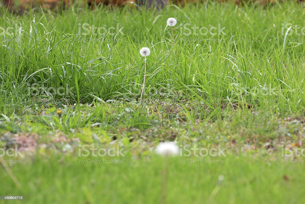 Grassy land royalty-free stock photo