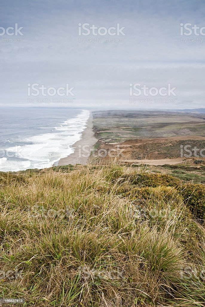 Grassy Meadow Above the Pacific stock photo