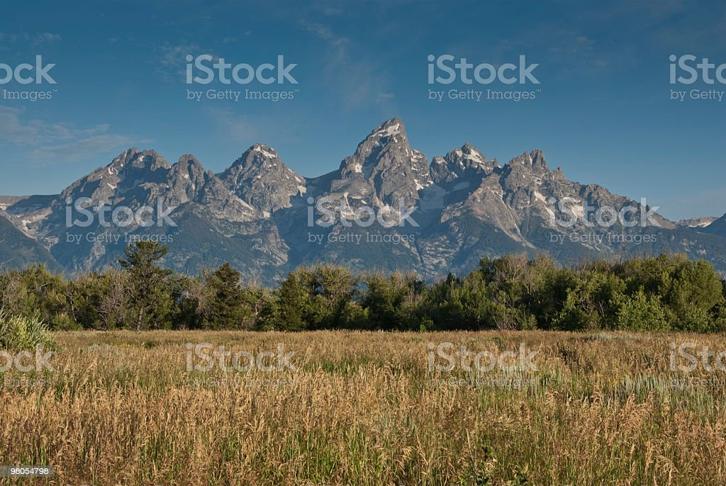 Grassy Meadow and Teton Range royalty-free stock photo