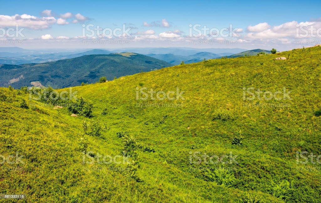 grassy meadow of mountain ridge stock photo