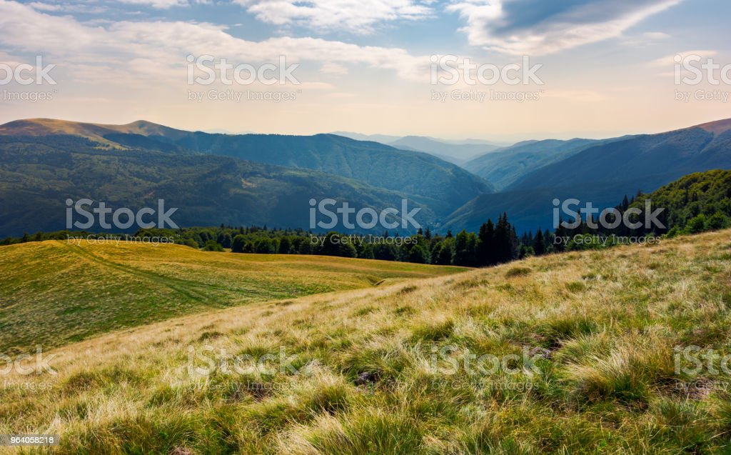 grassy meadow on forested hillside of Carpathians - Royalty-free Ancient Stock Photo