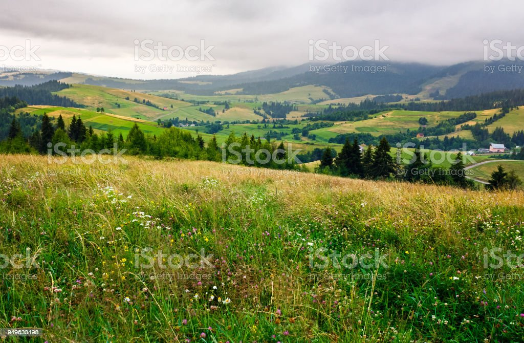 grassy meadow over the forest on a cloudy day stock photo