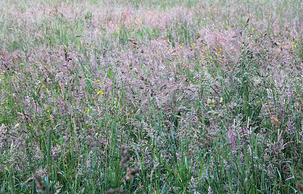 grassy meadow stoneyford derbyshire abjure stock pictures, royalty-free photos & images