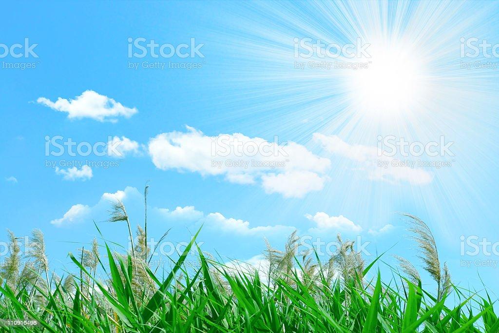 grassy royalty-free stock photo
