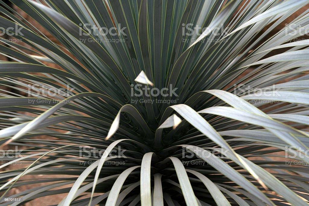 Grassy Plant royalty-free stock photo