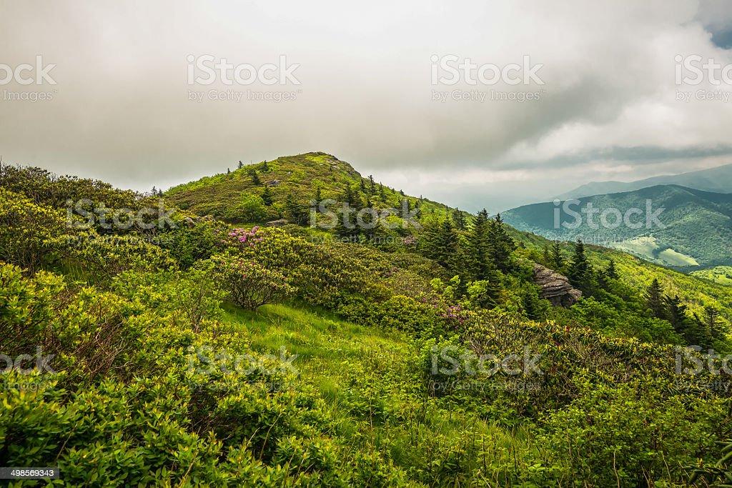 Grassy Ridge Vista stock photo