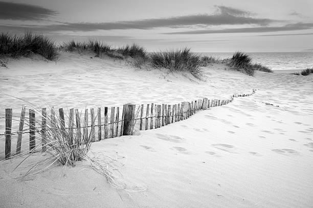 Grassy sand dunes landscape at sunrise in black and white stock photo