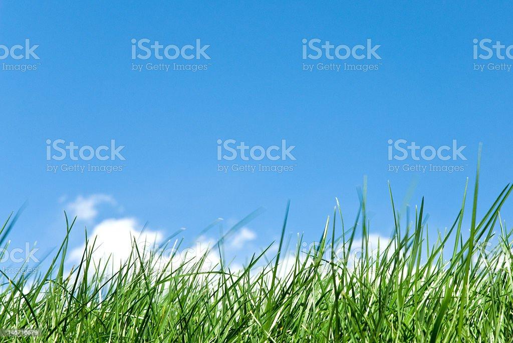 grassy skyline stock photo