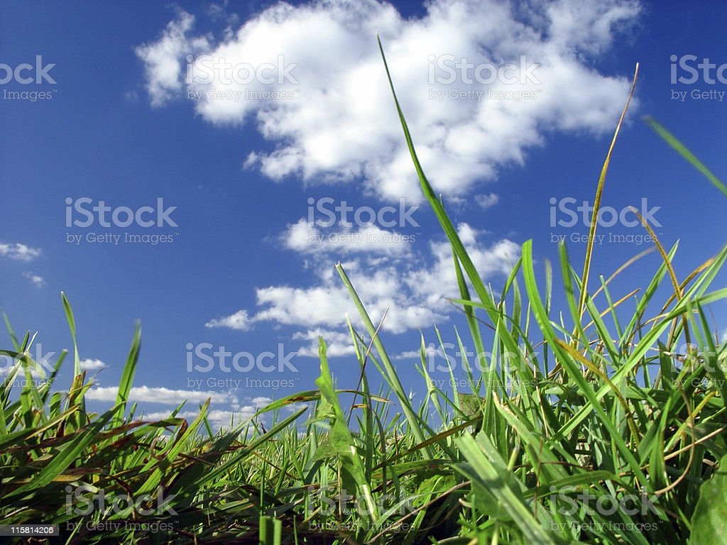 Grassy View royalty-free stock photo