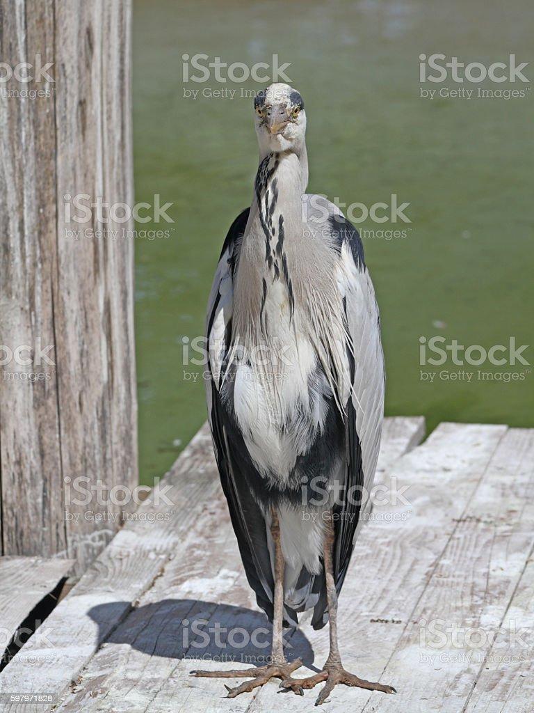 Gray jacket  – Foto