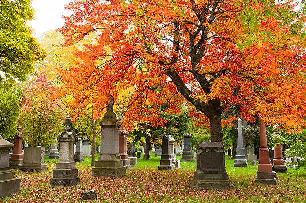grave stones and memorials under a red maple tree - cemetery stock photos and pictures