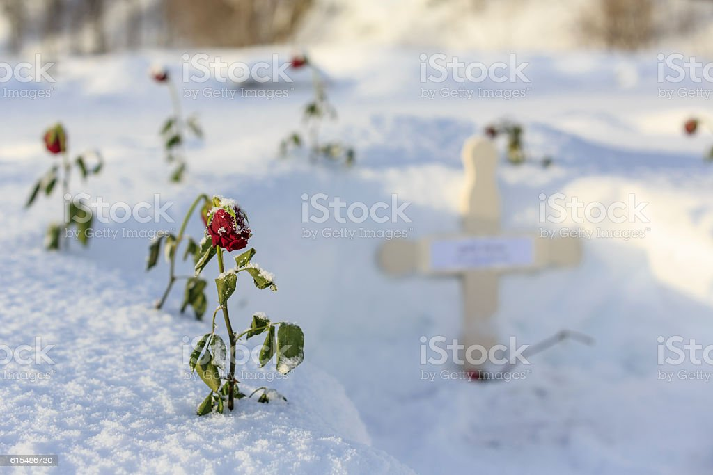 Grave with red roses in snow stock photo