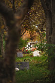 Distant image of grave with tombstone crosses. Cemetery is in forest.