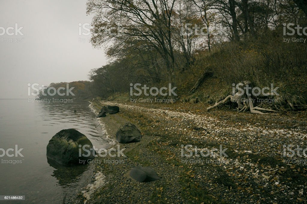 Gravel beach with oyster shells foto stock royalty-free