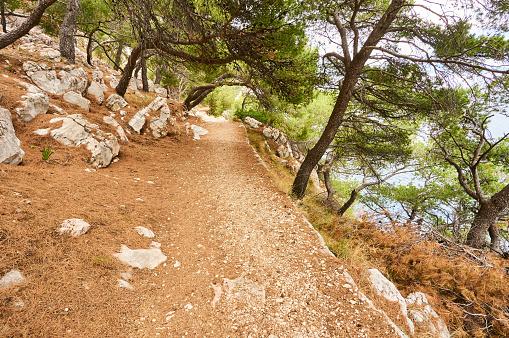 Gravel path in forest near Adriatic sea.