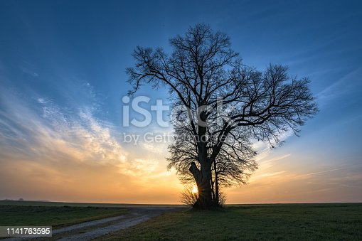 1034754000istockphoto Gravel path leads to a single tree in foggy morning mood in the sunrise 1141763595
