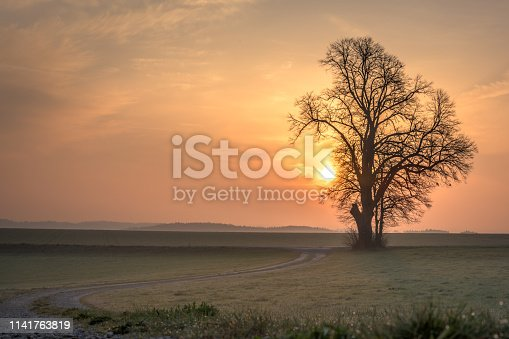1034754000istockphoto Gravel path leads to a single tree in foggy morning mood in the sunrise 1141763819