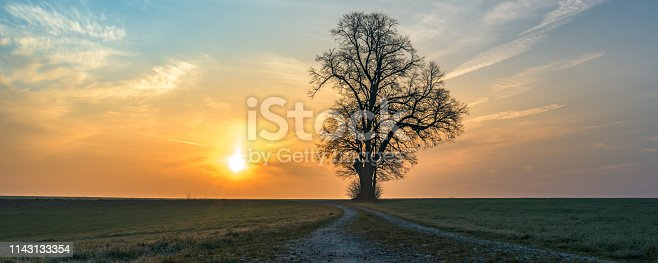 1034754000istockphoto Gravel path leads to a single tree in foggy morning mood in the sunrise 1143133354