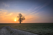 Gravel path leads to a single tree in foggy morning mood in the sunset