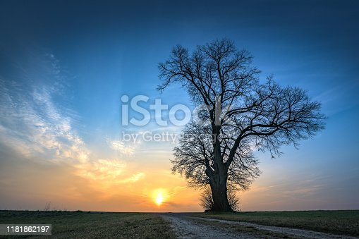 1034754000istockphoto Gravel path leads to a single tree in foggy morning mood in the sunrise 1181862197