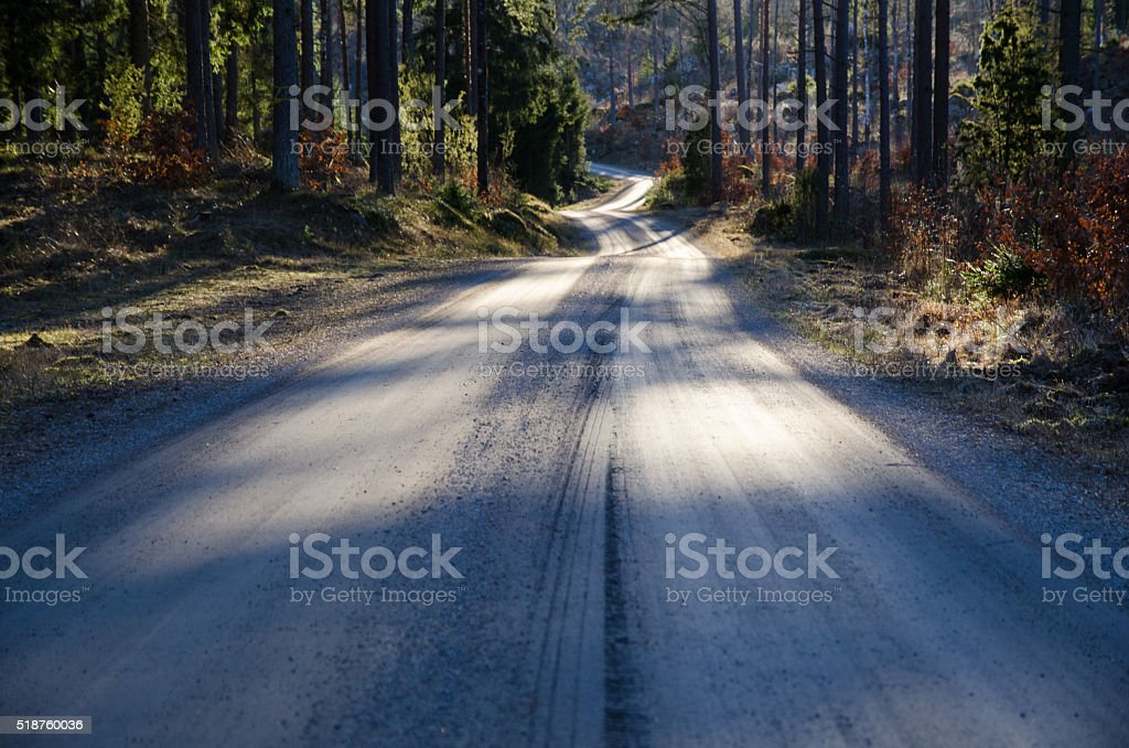 Gravel road in a coniferous forest at spring stock photo