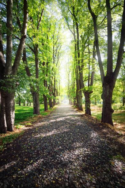 Gravel road through tall green trees in a city park on a clear summer picture id1225445094?b=1&k=6&m=1225445094&s=612x612&w=0&h=r bqmcdbsl9rqm5cig5h7adr1vwackhun5smp5pzgw8=