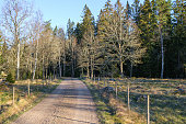Gravel road to the forest in spring