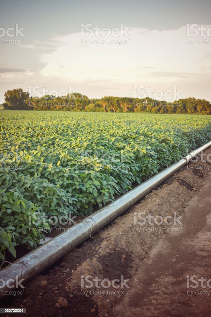 Gravity Irrigation Pipeline royalty-free stock photo