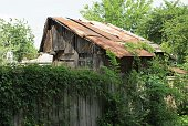 istock gray abandoned barn with a rusty roof behind a fence overgrown with green vegetation 1150112883