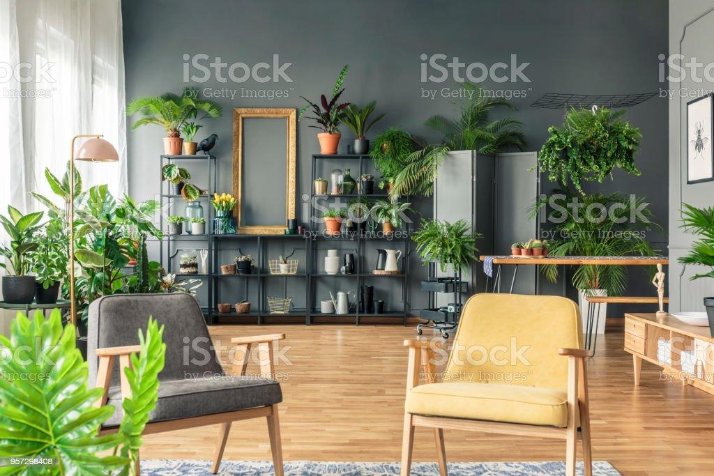 Grau Und Gelb Sessel Im Wohnzimmer Interieur Mit Pflanzen Auf Metallstander Gegen Schwarze Wand Stockfoto Und Mehr Bilder Von Botanik Istock