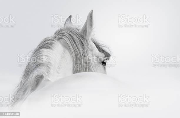 Gray andalusian stallion picture id114361940?b=1&k=6&m=114361940&s=612x612&h=ogqbnax1n9xrr1d vfiup4aeegmom0b9drqqbcpu5ny=