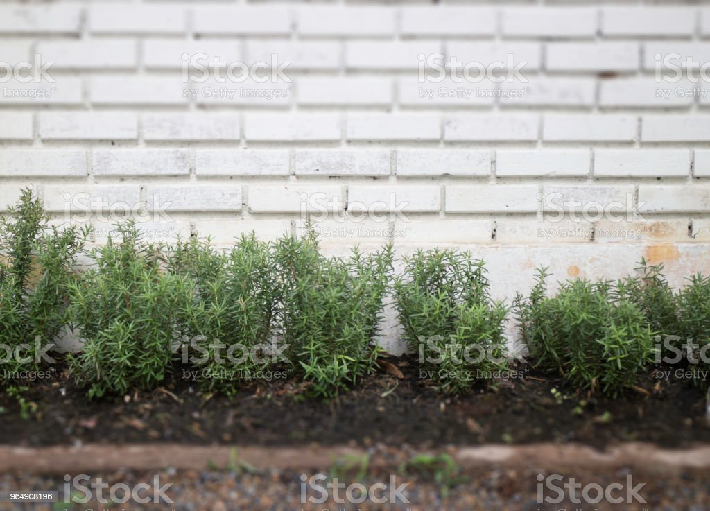 Gray brick wall in the garden royalty-free stock photo