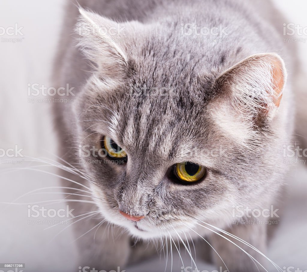 Gray cat  and a look from below up foto royalty-free