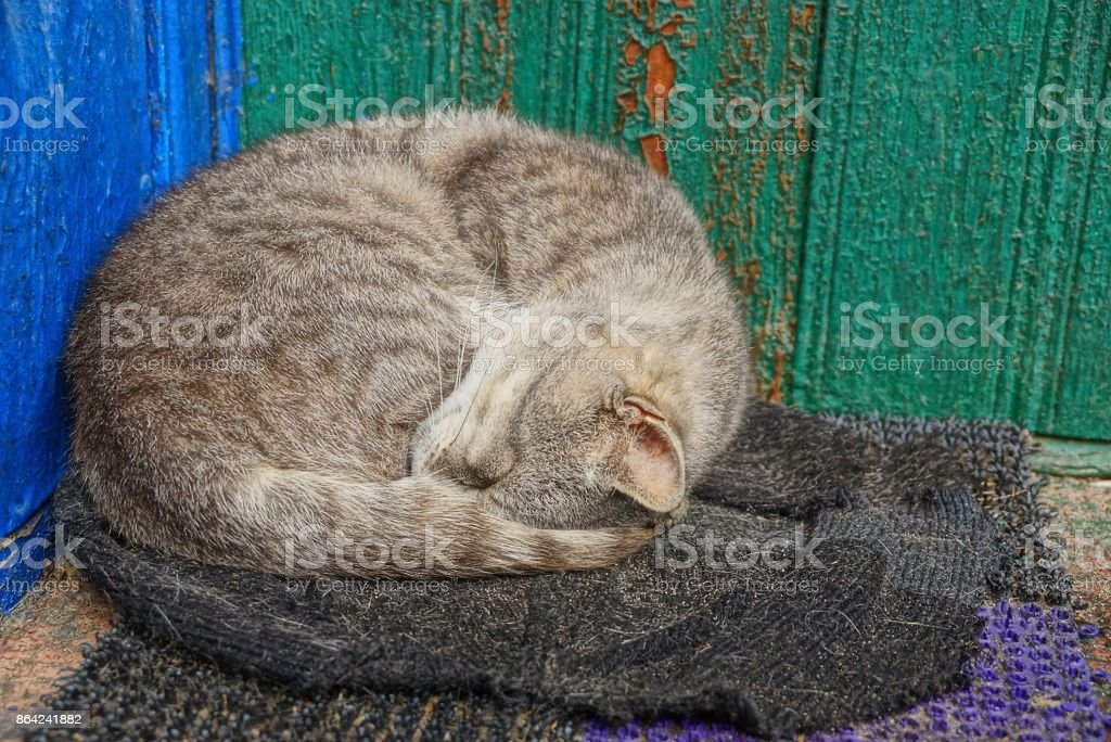 gray cat asleep on the doorstep of a house near a wall royalty-free stock photo